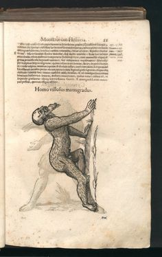 Monstrorum historia cum Paralipomenis historiae omn... | Aldrovandi, Ulisse