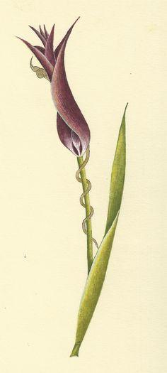 Hülya Aziz-Siyah Lale, 2009. #hulyaaziz #tulip #stylized #flower #art #miniature #buhari
