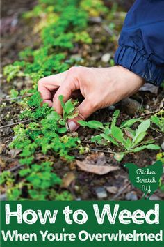 Stop letting weeds in the garden stress you out. Find out the best times and methods for weed removal and one big tip for prevention #vegetablegarden #gardenweeds #beginnergardener #vegetablegardeningforbeginners #chickenscratchny Tips And Tricks, Missouri, Pulling Weeds, Garden Weeds, Fruit Garden, Garden Fun, Fall Vegetables, Veggies, Organic Gardening Tips