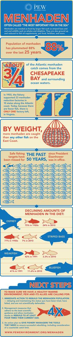 Menhaden Matter!  Little fish like menhaden are of vital importance to marine ecosystems and the ocean food chain. View our infographic to learn more about this fish, and take action by asking the Atlantic States Marine Fisheries Commission to restore the Atlantic menhaden population to a healthy level.