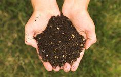 5 fertilizantes ecológicos para nutrir tus plantas