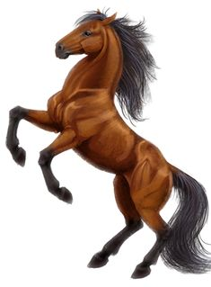 Horse Coat Color Genetics: An Introduction   This is the coolest page ever! Use the interactive chart to click different genes and see how they affect the horse illustration! A visual of how horse color genes work! http://www.jenniferhoffman.net/horse/appaloosa.html#gamewindow_anchor