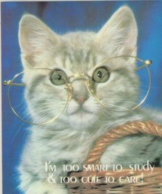 Cat Post Cards | I'm too smart to study & too cute to care - Vintage Post Cards