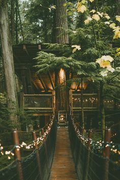 Sleepless Dreams | banshy: Capilano Suspension Bridge by: Rachel...