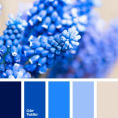 Cold range of blue shades is completed with silver. Large photos, posters, paintings and replicas with blue flowers can renovate color scheme of any room. In a study they might match stationary of the same color palette. Color Harmony, Color Balance, Blue Colour Palette, Colour Schemes, Colors Of The World, Interior Paint Colors, Design Seeds, Color Swatches, Color Inspiration