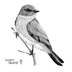 Paintings Search Result At Art <b>Art.</b> Blackford paintings search result at .</p>Art <b>Art.</b> Blackford paintings search result at . Bird Pencil Drawing, Bird Drawings, Pencil Art Drawings, Cool Art Drawings, Art Drawings Sketches, Animal Drawings, Drawing Animals, Black And White Birds, Black And White Sketches