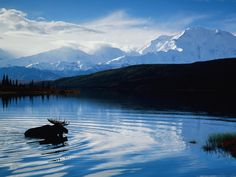 Denali National Park - A must see on your trip to Alaska! Call today, to book Alaska 2018 land or land/sea options - at the BEST rates! National Geographic Videos, National Geographic Expeditions, Visit Alaska, Fairbanks Alaska, Alaska Travel, Alaska Trip, Alaska Usa, Travel Tours, Travel Ideas