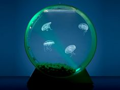 a jelly fish tank!! my nephew would love this. (Best Christmas Gifts | Everywhere - DailyCandy)