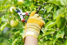 New Fruit Trees In Containers Herbs 51 Ideas Growing Fruit Trees, Growing Plants, Emergency Tree Removal, Fruit Trees In Containers, Tree Removal Service, Tree Pruning, Dressing For Fruit Salad, Fruit Painting, New Fruit