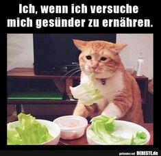 Ich, wenn ich versuche mich gesünder zu ernähren. | Lustige Bilder, Sprüche, Witze, echt lustig
