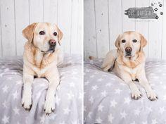 Hondenfotografie Hillegom - Dier en Baasje fotoshoot Labrador Aukje-10