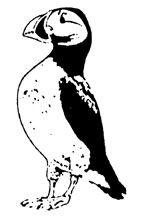 Puffin Rubber Craft Stamp - Rubber Stamps Direct http://www.stampsdirect.co.uk/puffin-rubber-stamp-486-p.asp