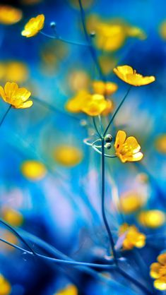How I adore buttercups...always have....always will...