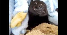 A Baby Bat Eating A Banana Is Way Cuter Than You Could Ever Imagine! | The Animal Rescue Site Blog