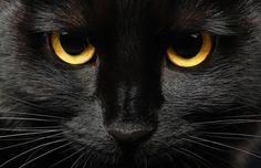 Apesar de em muitos países, dizerem ainda que gato preto dá azar, na Escócia, Irlanda e Japão eles significam sorte!