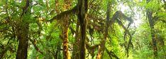 אולימפיק – ימים מושלמים בין יערות גשם ובתים בחוף – על טיולים ומה שביניהם Trunks, Plants, Drift Wood, Tree Trunks, Plant, Planets