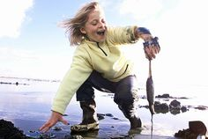 Washington razor clam diggers are anticipated to have an excellent season in 2012-13.