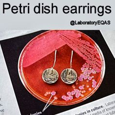 Petri Dish Earrings -  These tiny petri dishes are streaked with E. coli. Because of its long history of laboratory culture and ease of manipulation, E. coli plays an important role in modern biological engineering and industrial microbiology.