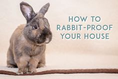 Don't cage your rabbit! Bunny Cages, Bun Bun, House Rabbit, Baseboard, Animal Care, Cords, Rabbits, Pet Care, Homestead