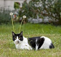 Funny cats - part 101 (40 pics + 10 gifs)