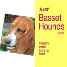 All about the Basset Hound... Information, photos, stories, and more! For breed enthusiasts, new owners, and those considering this breed as a pet.