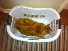 Rusty fills up the whole basket!!