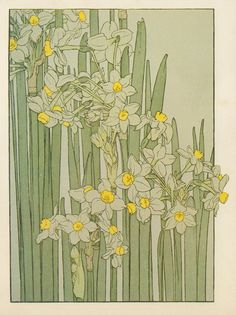 Narcissus ▫ Flower Study in the Art Nouveau Style ▫ Artist probably J Foord. Research ongoing