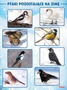 ptaki zimą - Szukaj w Google Montessori Education, Montessori Classroom, Feeding Birds In Winter, Games For Kids, Activities For Kids, Polish Language, Learning Time, Nursery School, Preschool Science