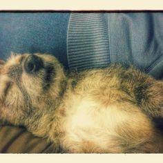 It's a doggs life... Another stressful day at Rebel Dogg Riders #rebeldoggriders  #mashtherebeldogg