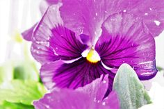 by Prendas Joaquim Pansies, Planting Flowers, Flora, Purple, Awesome, Plants, Gifs, Home, Ideas