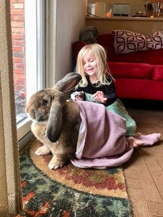 In the event you are looking for a family pet which is not just adorable, but simple to have, then look no further than a family pet bunny. Cute Baby Bunnies, Funny Bunnies, Cute Funny Animals, Cute Baby Animals, Cute Babies, Animals For Kids, Animals And Pets, Giant Bunny, Big Bunny