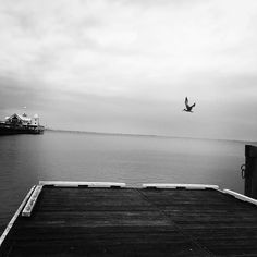 #geelong #geelongwaterfront #roadwarrior_dispatch #bay #melbournetouristguide #Australia  #bnw_rose #bnw_magazine #bnw_australia #bnw_magazinemembersonly  #sky #water #fishing #pier #storm #photo_storee_bw #dispatch_nature #danowens  #7bnwcreation_1day #bnw_mycitylife  #reflections #melbonpix #best_expression_bnw #instagram #instagood #calm #photography by sloanedoggy http://ift.tt/1JtS0vo
