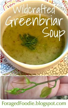 This #wildcrafted spring soup is made from foraged greenbriar (Smilax) and potatoes. It tastes like a potato and leek soup, but with edible weeds! From the Foraged Foodie.
