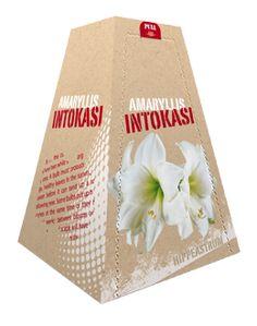 """€ 3,99 (incl. btw) Amaryllis Intokazi maat 26/28 in een piramide gevormd doosje. De Amaryllis geeft 8 tot 10 weken na het planten mooie witte bloemen. Deze """"piramide"""" heeft door zijn opmaak een natuurlijke uitstraling. Door de vorm van het doosje is het een uniek geschenk om te geven. Op het doosje vind je de plantinstructies en een QR-code. Als je de QR-code scant vind je plant tips, instructies en verschillende video's. Een mooie verpakking voor een groen cadeau."""