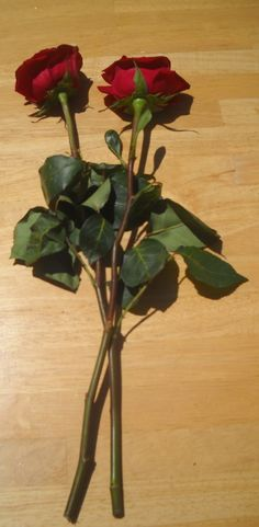DIY Gardening � How to Regrow Roses from Bouquet Stems