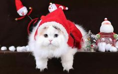 Christmas Kitten, Christmas Time, Christmas Ornaments, Kittens Cutest, Cats And Kittens, Kitten Mittens, Animal Magnetism, Cute Images, More Cute