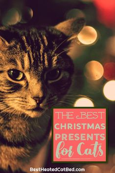 We have come up with a list of perfect presents that are certain to please! We are sure that you can find exactly what you are looking for on our list of Christmas gifts for kitties. Christmas Presents For Cats, Christmas Ties, Great Christmas Gifts, 1st Christmas, Ugly Christmas Sweater, Heated Outdoor Cat House, Heated Cat Bed, Heating Pads, Cute Stockings