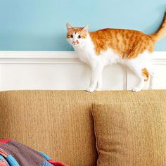Stumped by all the cute names? We have 50 boy cat names for you to try: http://www.bhg.com/pets/cats/cat-names/50-fun-names-for-boy-kitties/?socsrc=bhgpin091714boycats