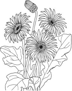 African daisy gerbera jamesonii coloring page