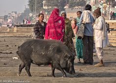 Raj Ghat in #varanasi #uttarpradesh #india. January 21 2017. #people #travel #all_mypeople #bnw_magazine #documentary #eyeem #everydayeverywhere #gangesriver #great_portraits #great_captures_people #igers #ig_global_life #ig_global_people #people_storee #peoplescreative #people_and_world #phototag_it #photo_storee #photographers_of_india #re_tratos #street_portrait #streetlife_award #street_photo_club #uttarpradeshtourism #uptourism