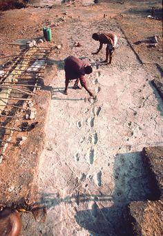 1976 - El equipo de Mary Leakey descubre y despeja el rastro de un grupo de homínidos en Laetoli, al sur de la garganta de Olduvai, Tanzania