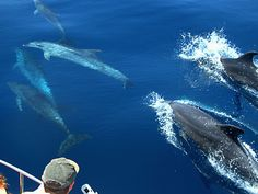 Watch Sperm whales, Orcas, Fin whales, Pilot whales and dolphins in Spain! Respectful whale watching in the Strait of Gibraltar with firmm. Oh The Places You'll Go, Places To Travel, Places To Visit, Tenerife, Surf, Holiday Places, Cadiz, Whale Watching, Roadtrip