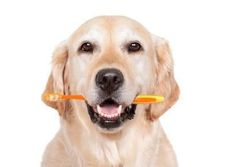 Toothbrush Tuesday! FREE teeth brushing for daycare campers with purchase of toothbrush and toothpaste from us. http://www.campcanineflorida.com/ #dogdaycare #catdaycare #campcanine