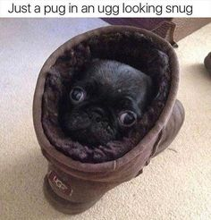 Funny Animal Pictures Of The Day 21 Pics - Funny Dog Quotes - Funny Animal Pictures Of The Day 21 Pics Order an oil painting of your pet now at www.petsinportrai The post Funny Animal Pictures Of The Day 21 Pics appeared first on Gag Dad. Funny Animal Memes, Dog Memes, Cute Funny Animals, Funny Animal Pictures, Cute Baby Animals, Funny Cute, Cute Pictures, Memes Humor, Funny Memes