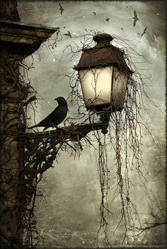 A raven on the lamp post
