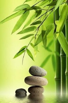Rocks bamboo Zen Image Wall Art Home Decor Wall Art New Light Switch Plate