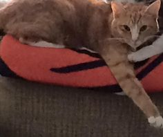 orange  Mike BocchinoAnimals Lost and Found - Greenwich, CT https://www.facebook.com/groups/394434437363438/permalink/663283140478565/ This is my 10yr old sons cat Rosie. She is an orange tabby Who went missing on Sunday, November 8. We live in Byram she was last seen by Tingue St. and Delavan Avenu   This is my 10yr old sons cat Rosie. She is an orange tabby Who went missing on Sunday, November 8. We live in Byram she was last seen by Tingue St. and Delavan Avenue. She is an indoor cat