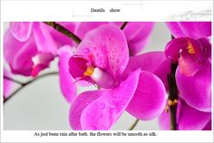 Real Touch Artificial Wedding Favors Orchids for Sale