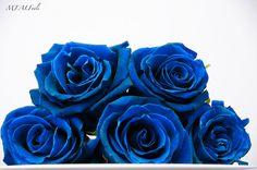 [Past Post] Blue Rose | Esperanza Writes