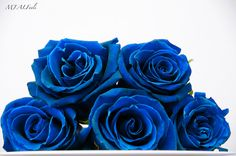 [Past Post] Blue Rose | Esperanza Writes